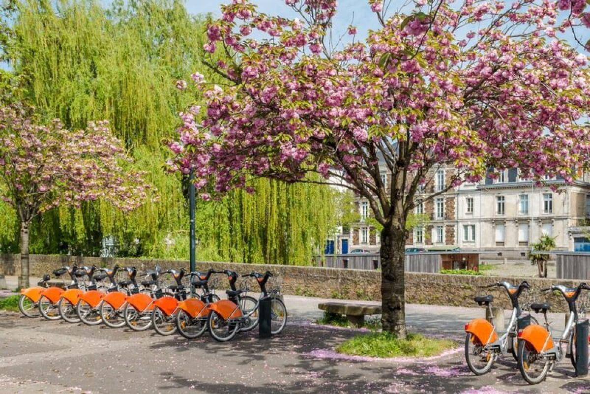 Fleurs de cerisiers et vélos en libre service à Nantes