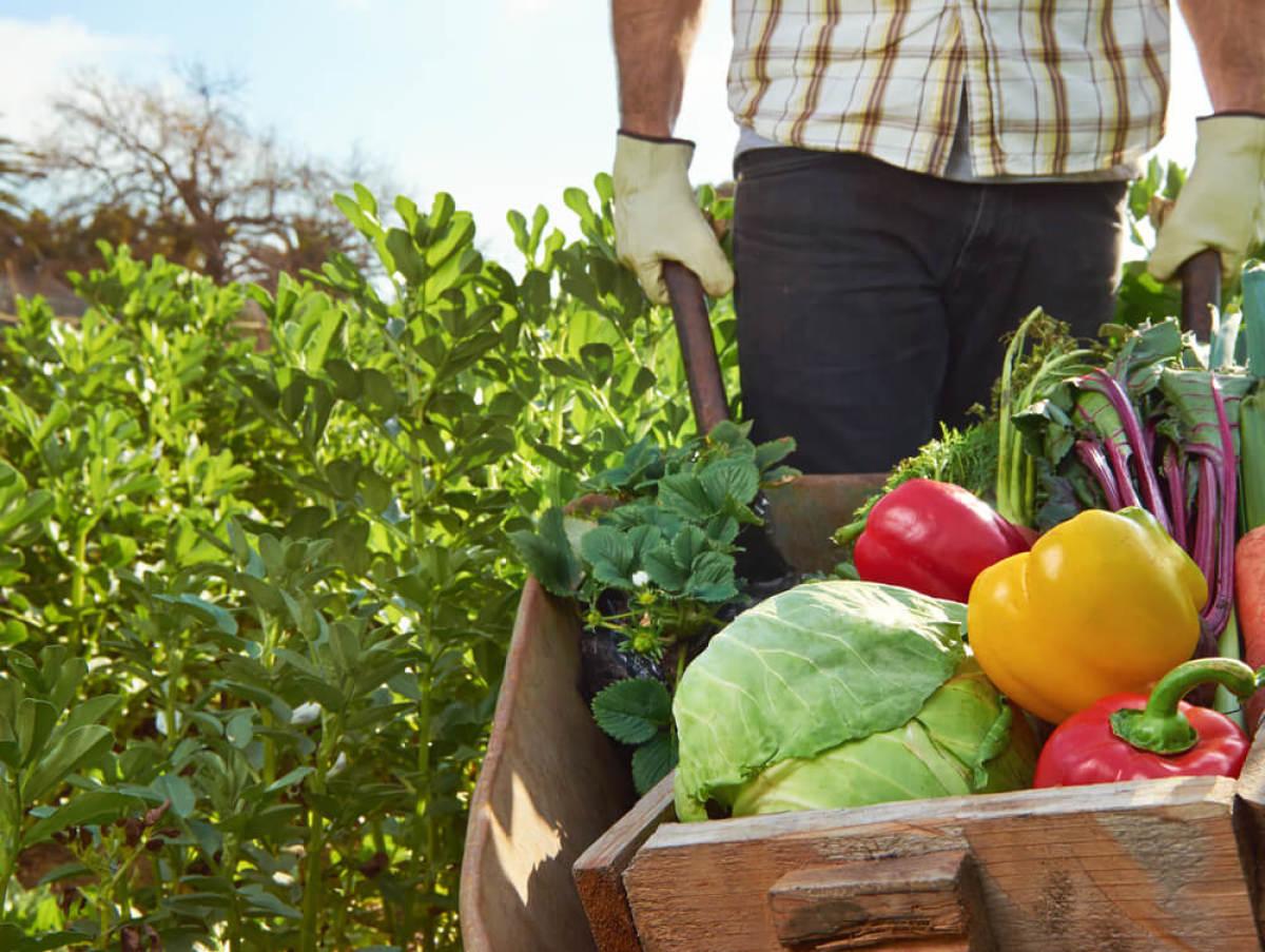legumes dans une brouette