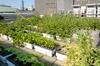 Ferme urbaine à Nantes – Jardin sur le toit d'un immeuble