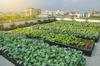 Actualité à Nantes - Agriculture urbaine : 2 nouvelles fermes urbaines dans les quartiers nord de Nantes