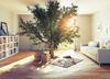 Immobilier écologique – un arbre au milieu d'une salle de séjour