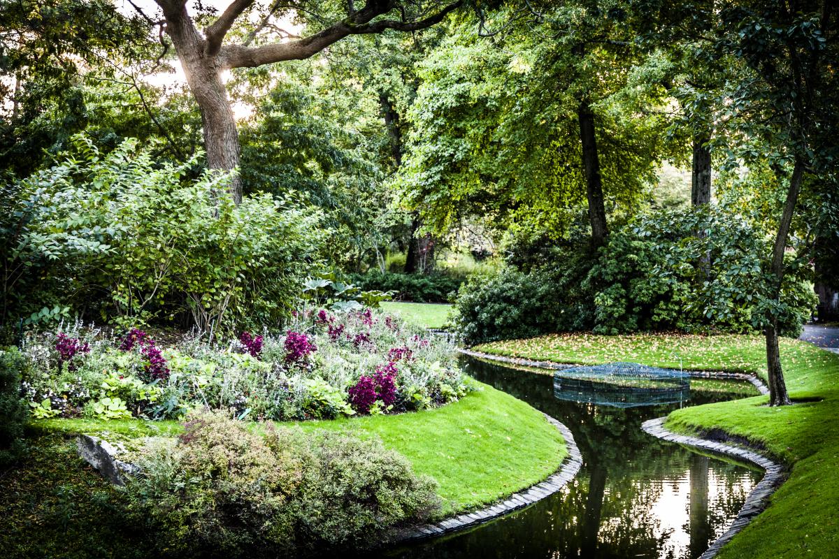 Arbre aux hérons – Vue du jardin des plantes à Nantes