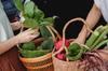 Projet Doulon Gohards - Paniers remplis de légumes